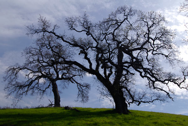 Photo by Scott Haefner: arastradero09