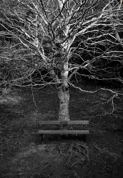 Photo by Scott Haefner: Lonely Bench