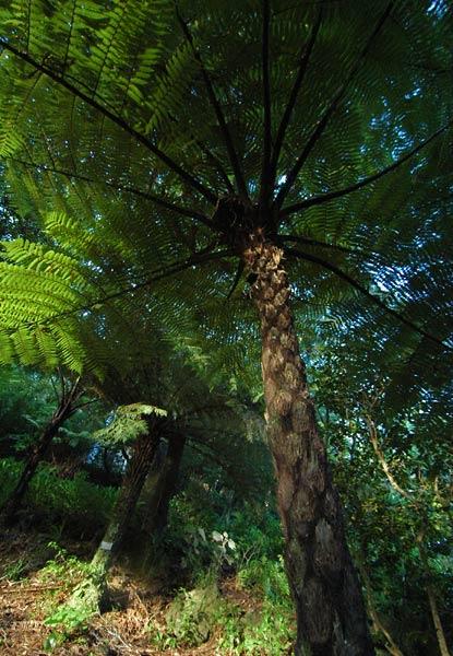 Photo by Scott Haefner: Wellington Botanic Garden