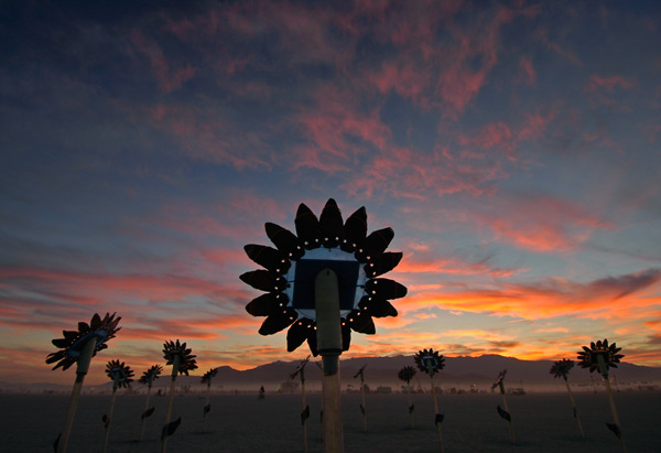 Photo by Scott Haefner: Sunflower Robots
