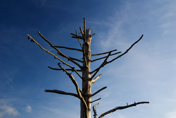 Photo by Scott Haefner: deadTree01