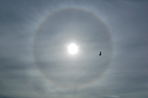 Photo by Scott Haefner: Sun Halo