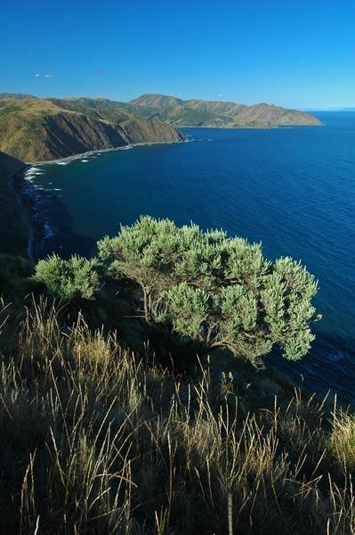 Photo by Scott Haefner: Makara Beach