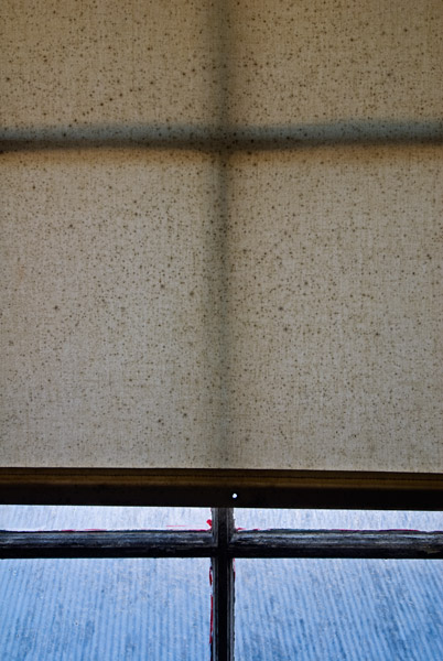 Photo by Scott Haefner: Window Shade