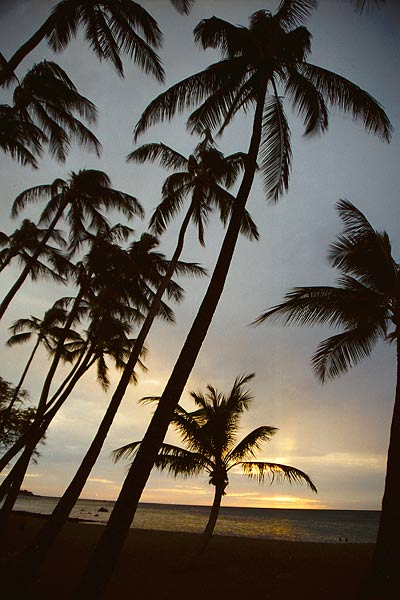 Photo by Scott Haefner: palmtrees