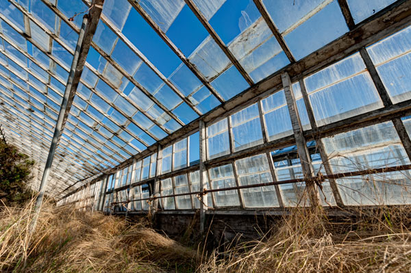 Photo by Scott Haefner: Infinite Greenhouse