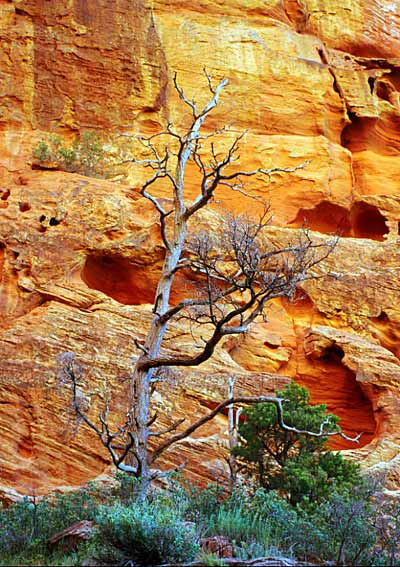 Photo by Scott Haefner: ziontree