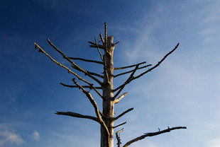 Photo: deadTree01